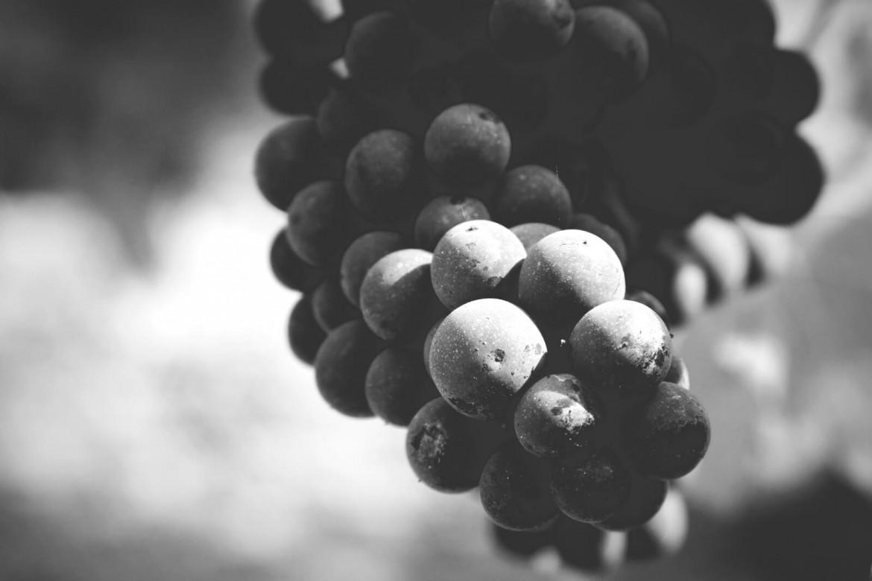 Maturazione dell'uva, la magia della natura
