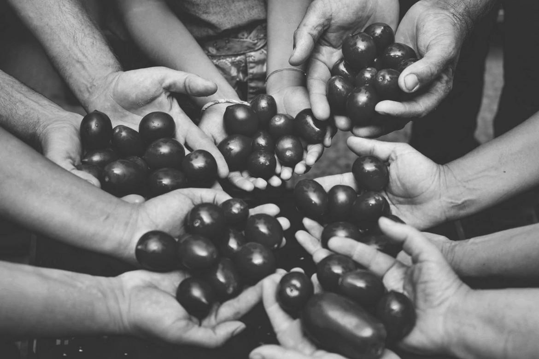 Come quella della Nonna: la passata di pomodoro