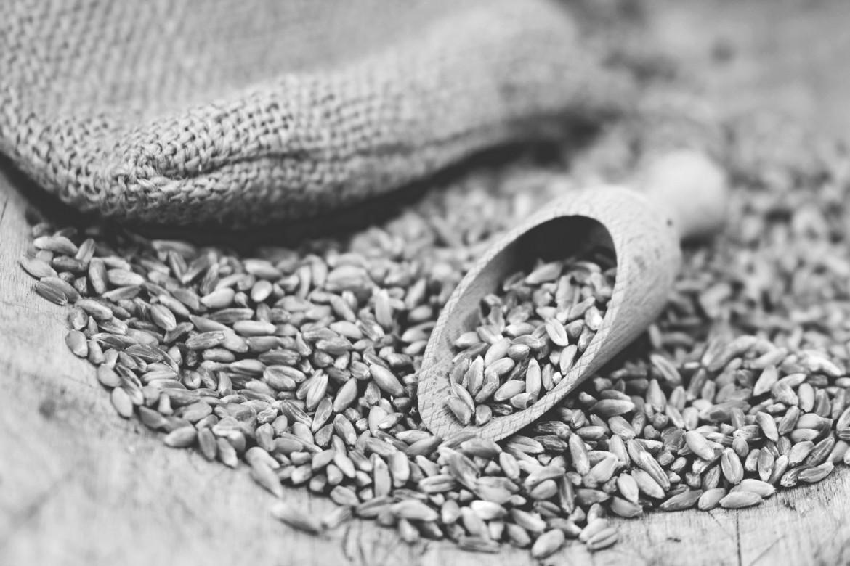 Riscoperta del farro: il seme ancestrale