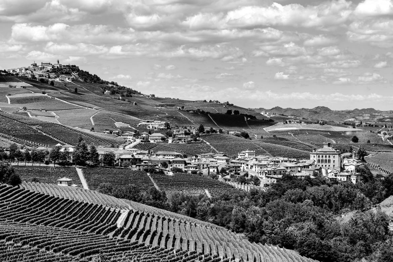 Hanno espiantato le vigne antiche della Romanée-Conti italiana