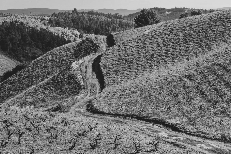 Lungo i sentieri delle vigne antiche del Cile