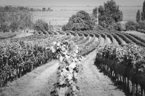 Claus Preisinger e la new wave del vino austriaco
