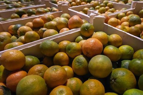 I Succhi di Frutta