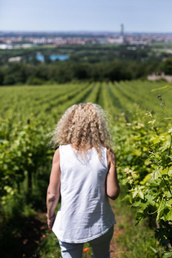 musella winery