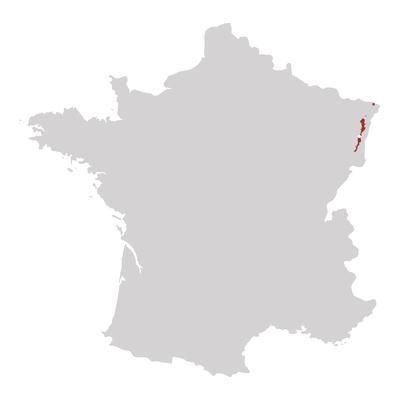 Bannwarth Francia